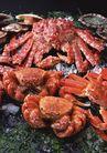 新鲜渔获0197,新鲜渔获,饮食水果,新鲜螃蟹
