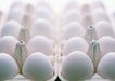 新鲜肉品蛋0159,新鲜肉品蛋,饮食水果,