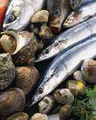 火锅料理0072,火锅料理,饮食水果,海鲜 鱼儿 贝壳