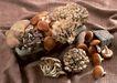 食物与器皿0146,食物与器皿,饮食水果,各种蘑菇