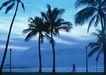 夏威夷0162,夏威夷,生活方式,树下的人