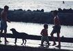 夏威夷0168,夏威夷,生活方式,狗狗