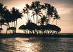 夏威夷0175,夏威夷,生活方式,四季青 绿叶 夏天