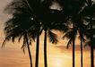 夏威夷0183,夏威夷,生活方式,椰树
