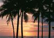 夏威夷0184,夏威夷,生活方式,树木 黄昏