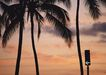 夏威夷0185,夏威夷,生活方式,植物