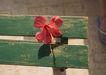 夏日少女海滩0170,夏日少女海滩,生活方式,红花