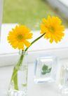 女性健康生活0153,女性健康生活,生活方式,春季花朵