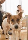 家居0155,家居,生活方式,忠实的狗狗