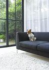 家居0200,家居,生活方式,白色窗帘 一只狗