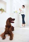家有宠物0057,家有宠物,生活方式,窗台 家居女子 长毛狗