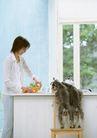 家有宠物0060,家有宠物,生活方式,台子 顽皮狗狗 一个主妇
