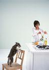 家有宠物0062,家有宠物,生活方式,椅子