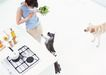 家有宠物0066,家有宠物,生活方式,顽皮狗狗