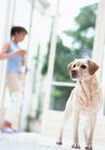 家有宠物0070,家有宠物,生活方式,忠实的狗