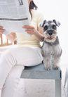 家有宠物0099,家有宠物,生活方式,宠物狗 坐着 刊物