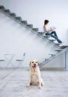 家有宠物0101,家有宠物,生活方式,椅子 楼梯 坐楼梯上看书
