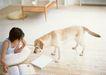 家有宠物0111,家有宠物,生活方式,爱犬