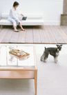 家有宠物0116,家有宠物,生活方式,居家女性
