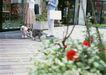家有宠物0151,家有宠物,生活方式,户外