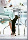 家有宠物0155,家有宠物,生活方式,乖乖狗