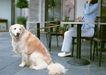 家有宠物0157,家有宠物,生活方式,忠实宠物