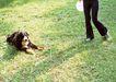 家有宠物0181,家有宠物,生活方式,青草地 宠物