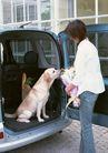 家有宠物0188,家有宠物,生活方式,车辆 花束