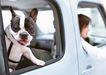 家有宠物0191,家有宠物,生活方式,车内