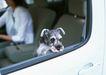 家有宠物0192,家有宠物,生活方式,车窗 伸出头
