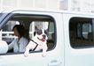 家有宠物0193,家有宠物,生活方式,驾车