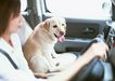 家有宠物0196,家有宠物,生活方式,方向盘