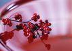 惬意风情0158,惬意风情,生活方式,红果子