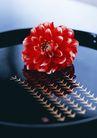 惬意风情0161,惬意风情,生活方式,大红花朵