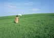 户外休闲0169,户外休闲,生活方式,广袤草原