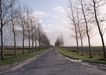 道路美景0164,道路美景,交通,枯树