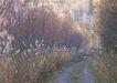 道路美景0170,道路美景,交通,雾天
