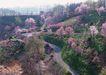 道路美景0175,道路美景,交通,映山红 大山 草地