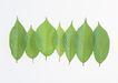 叶子和绿叶0147,叶子和绿叶,植物,
