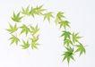 叶子和绿叶0150,叶子和绿叶,植物,