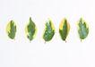 叶子和绿叶0153,叶子和绿叶,植物,