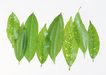 叶子和绿叶0162,叶子和绿叶,植物,