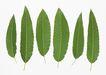 叶子和绿叶0163,叶子和绿叶,植物,
