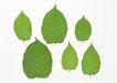 叶子和绿叶0164,叶子和绿叶,植物,