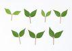 叶子和绿叶0167,叶子和绿叶,植物,