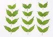 叶子和绿叶0170,叶子和绿叶,植物,