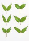 叶子和绿叶0171,叶子和绿叶,植物,树叶 绿色 6片