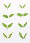 叶子和绿叶0172,叶子和绿叶,植物,8片 不同 大小