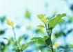 新绿叶0148,新绿叶,植物,