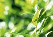 新绿叶0149,新绿叶,植物,